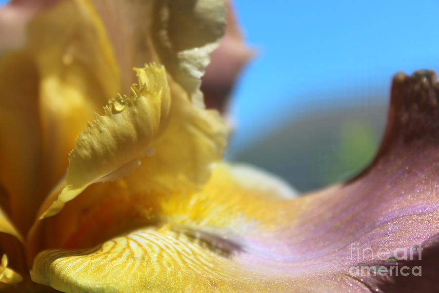 Macro Photograph - Iris Landscape by Stacey Zimmerman