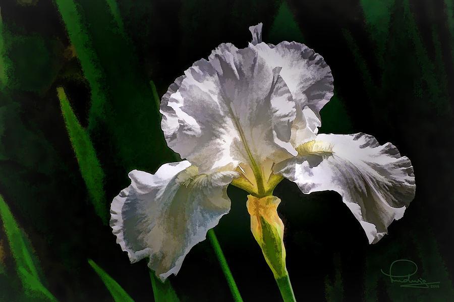 Iris by Ludwig Keck