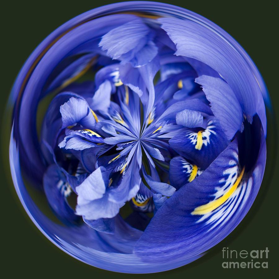 Anne Gilbert Photograph - Iris Orb by Anne Gilbert