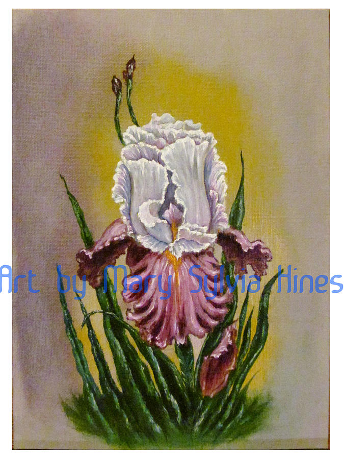 Paintings Painting - Iris Study V2 by Mary Sylvia Hines