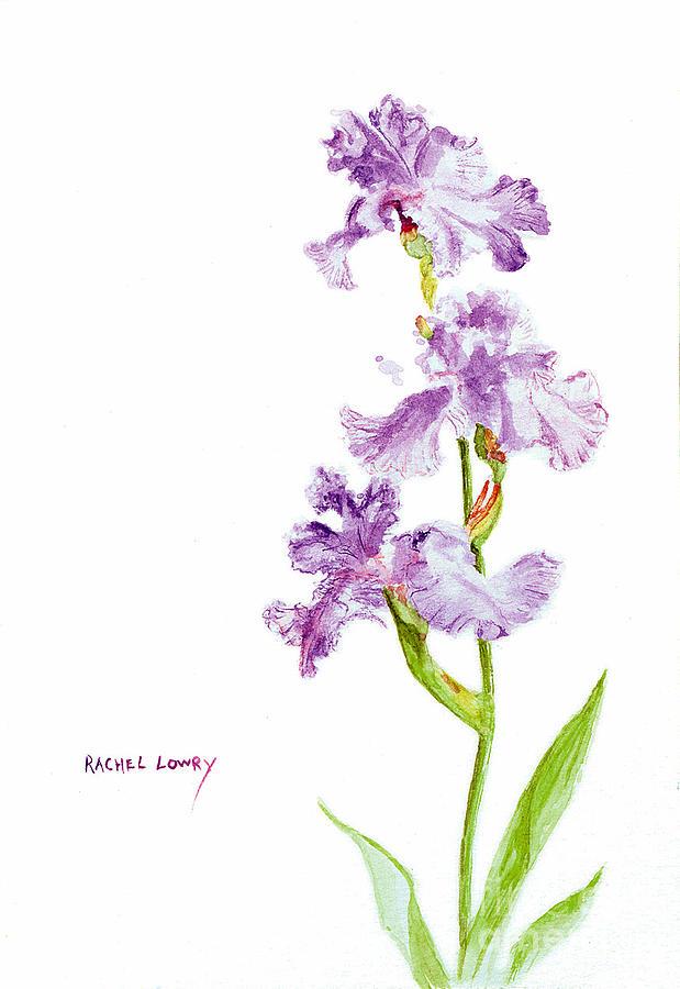Iris Trio by Rachel Lowry
