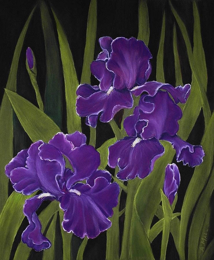 Pastel Painting - Irises by Anastasiya Malakhova