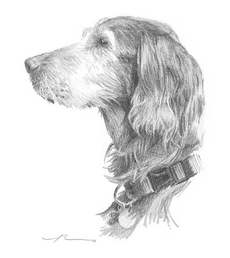 Irish Setter Dog Pencil Portrait Drawing by Mike Theuer