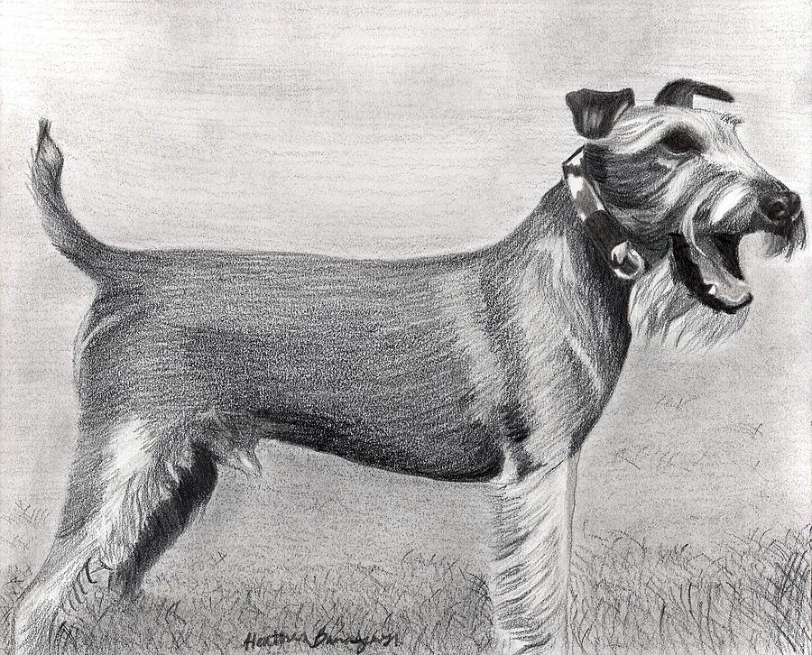 Irish Terrier Dog Portrait Drawing by Olde Time  Mercantile