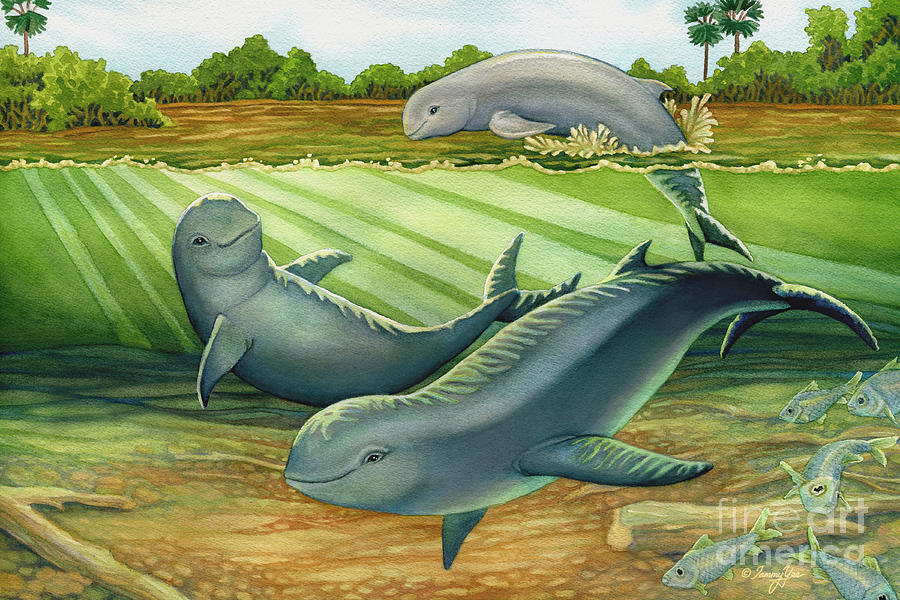 Dolphin Painting - Irrawaddy Or Mekong River Dolphin by Tammy Yee