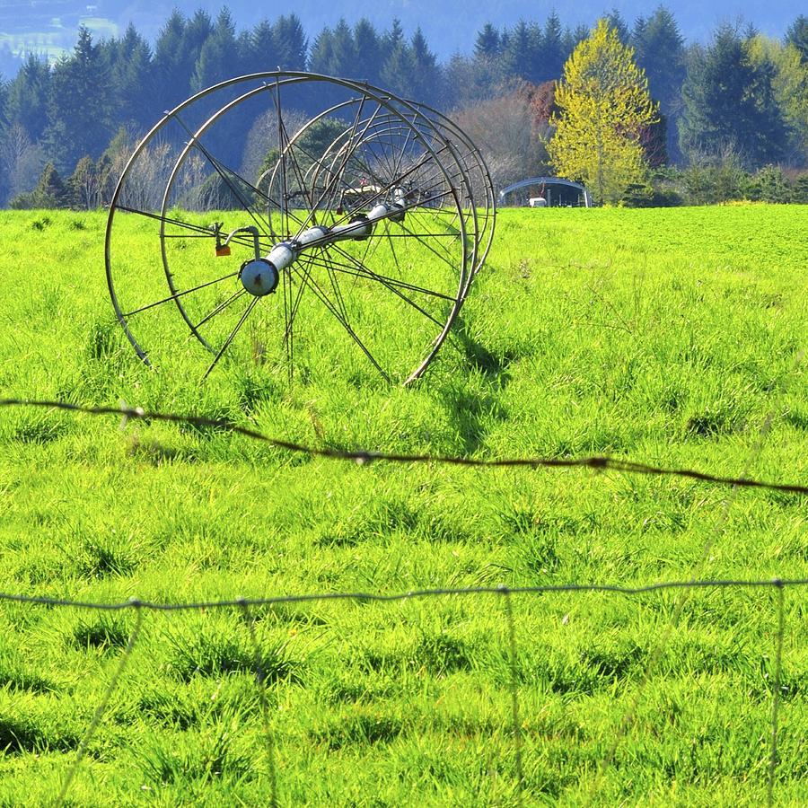 Irrigation Line 22529 Photograph