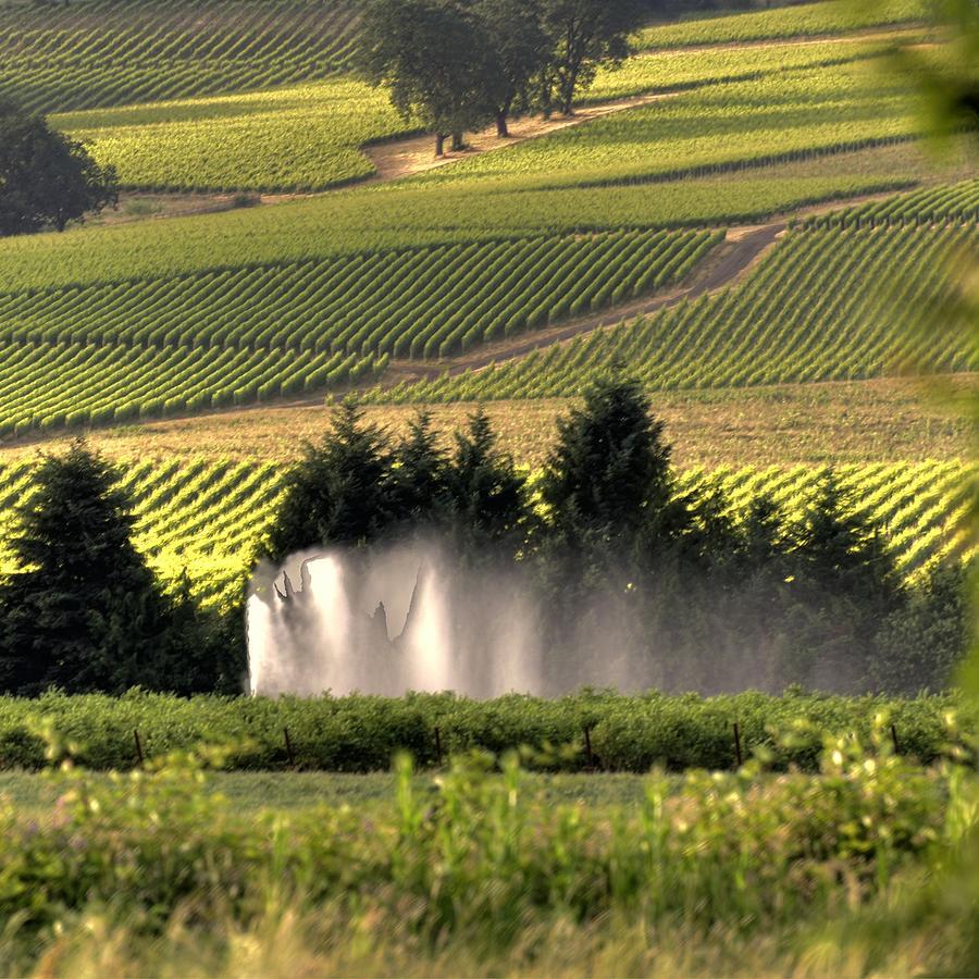 Irrigation Sprinkler 25194 Photograph