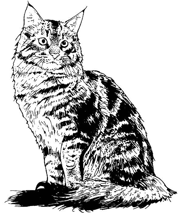 Cat Drawing - Is That You? by For The Love Of Art