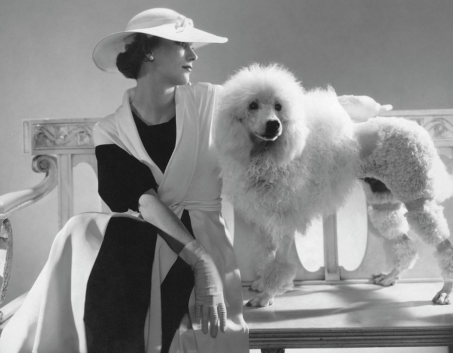 Isabel Johnson With A Poodle Photograph by Edward Steichen