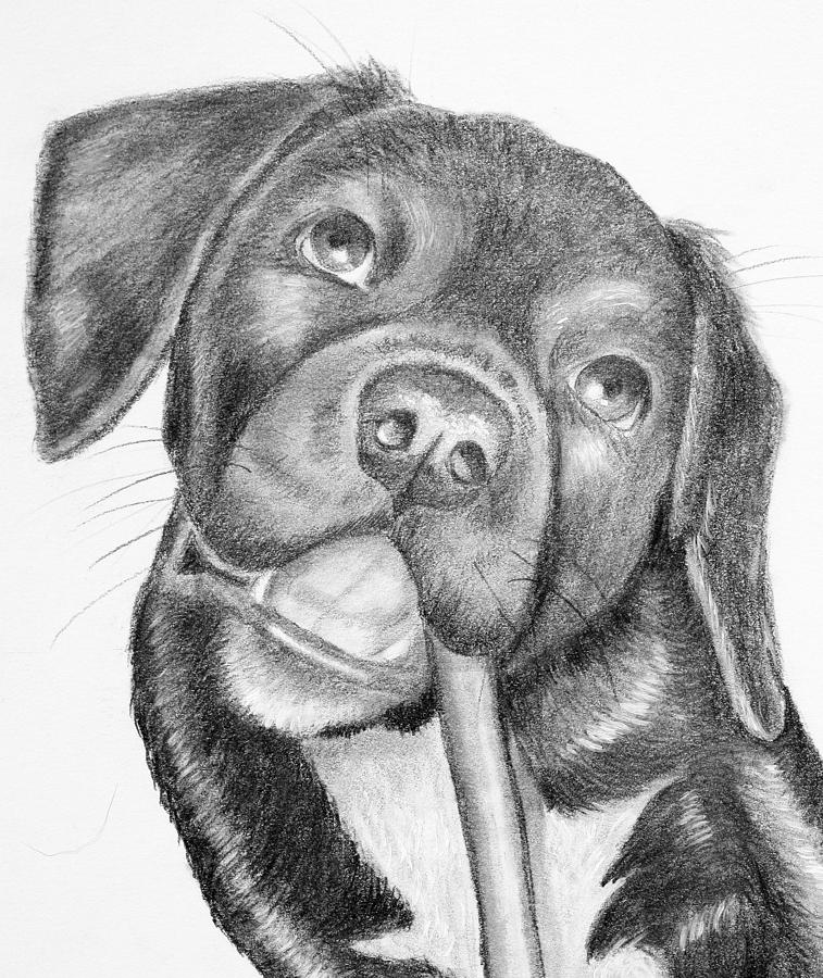 Harley Chewing Drawing - Isnt Life Grand? by Lorraine Foster