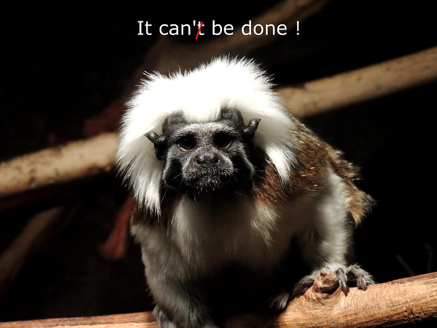 Monkey Photograph - It Can Be Done  by Mark Moore