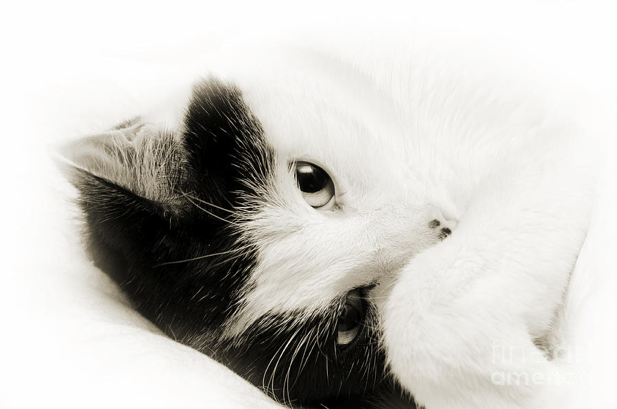 Cat Photograph - It Is Hard To Be So Cute by Andee Design