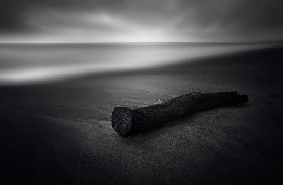 Log Photograph - It Was Calm by Carlo Tonti