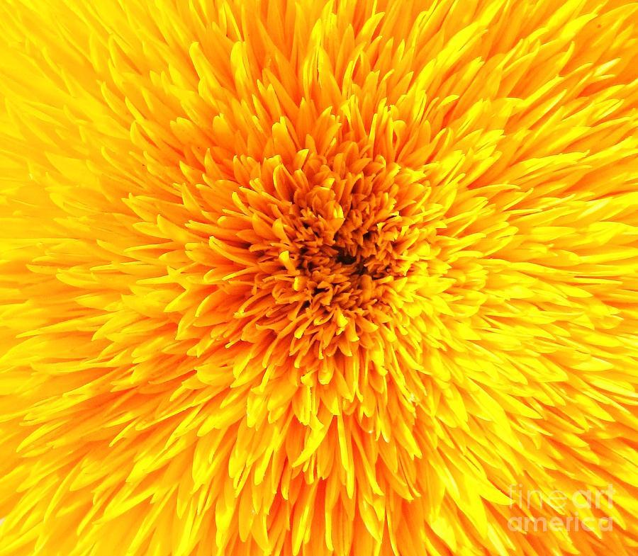 Italian Photograph - Italian Sunflower Detail by C Lythgo
