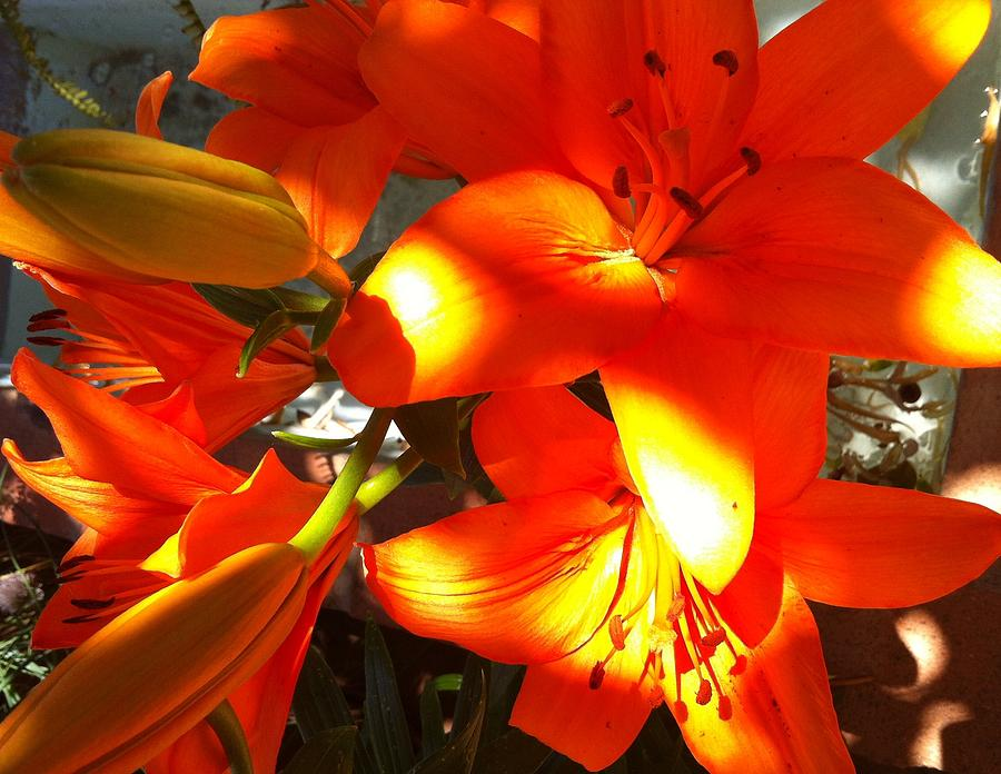 Lily Photograph - Its A Beautiful Day Lily by Stephanie Aarons