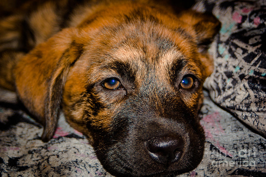 Puppy Photograph - Its A Dogs Life by Ronny Sczruba