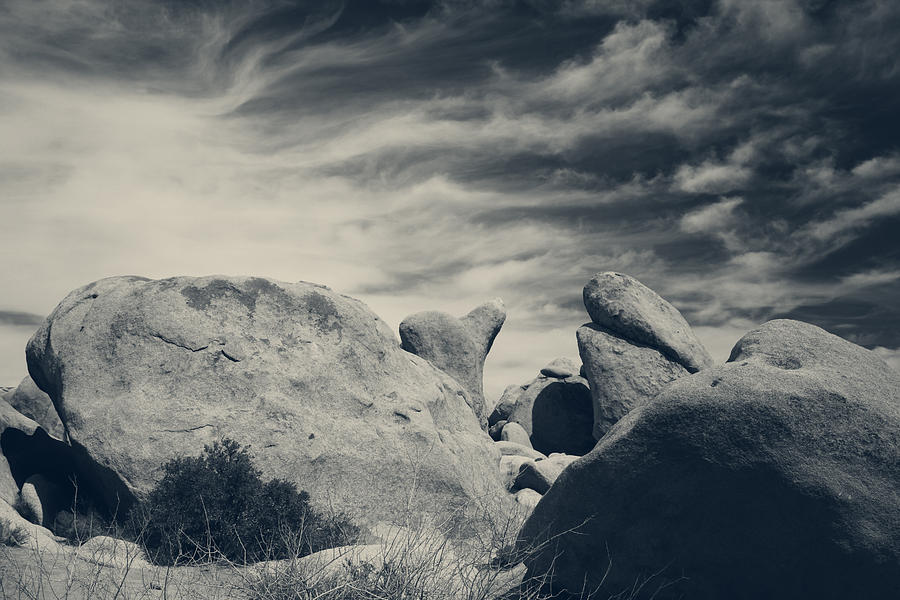 Joshua Tree National Park Photograph - Its A Powerful Thing by Laurie Search