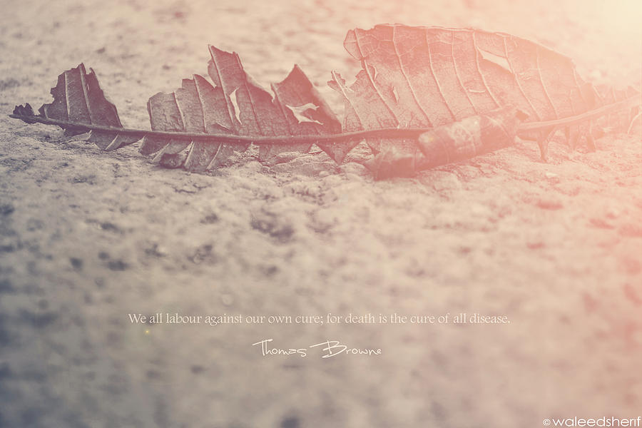 Leaf Photograph - Its Death Again by Waleed Sherif