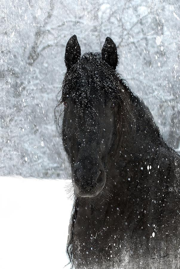 Friesian Horses Photograph - Its Friesian Out Here by Fran J Scott