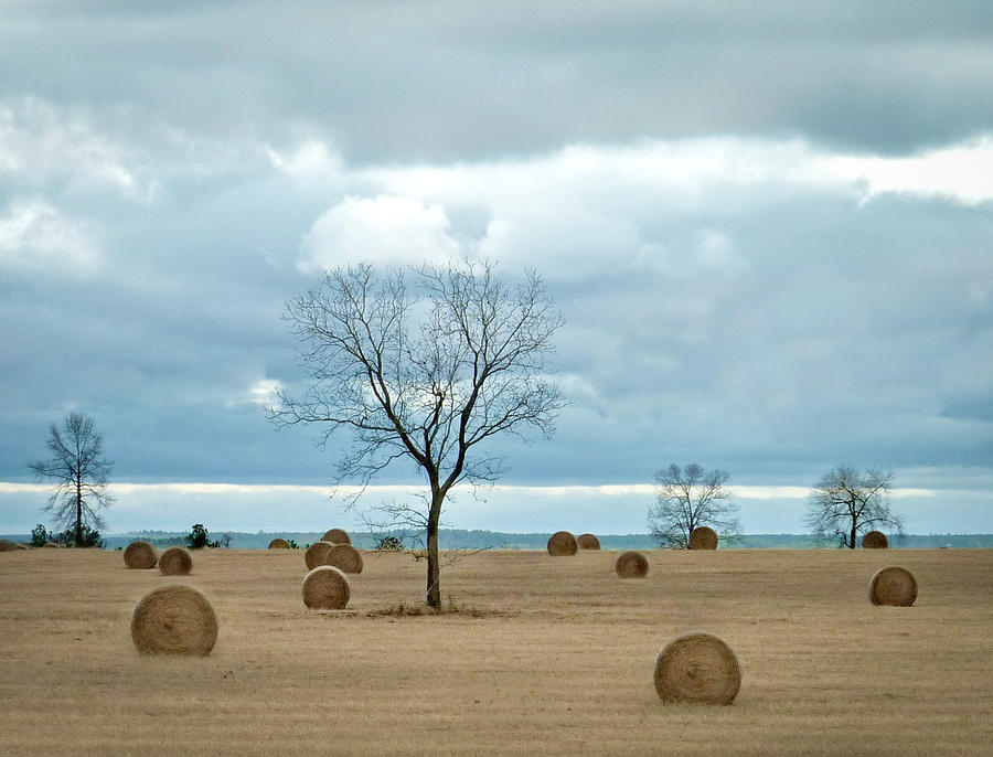 Bales Of Hay Photograph - Its Hay Day by EG Kight