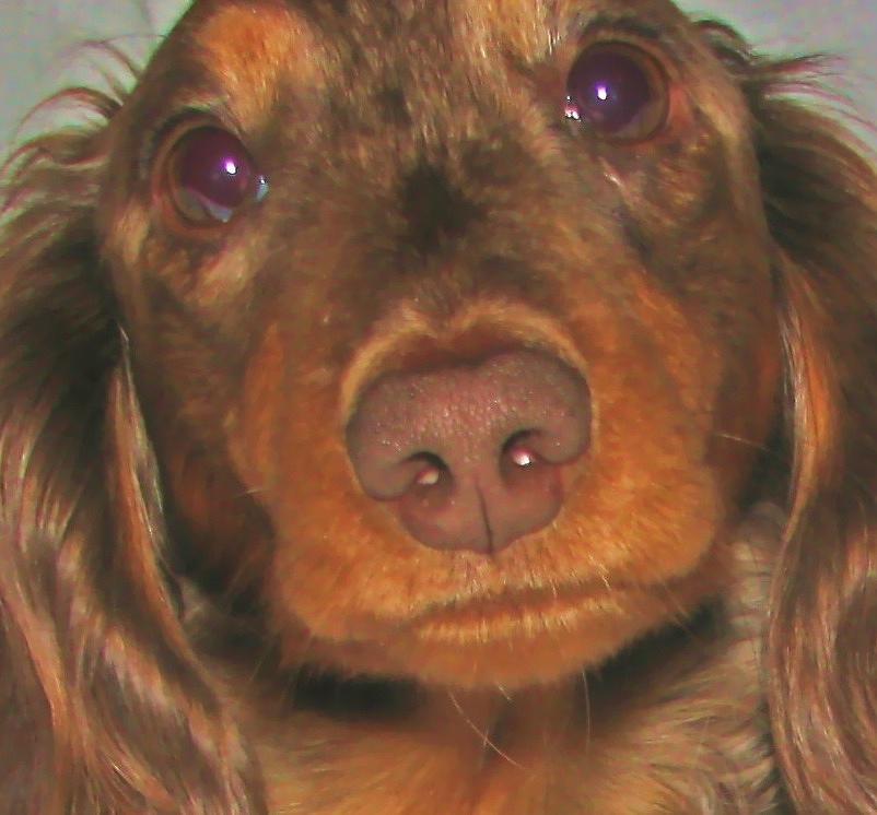 Pet Mixed Media - Its Hershey by Victoria Sheldon