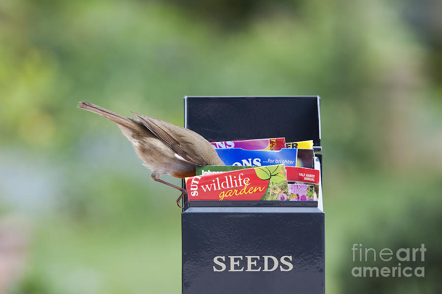 Robin Photograph - Its In Here Somewhere by Tim Gainey