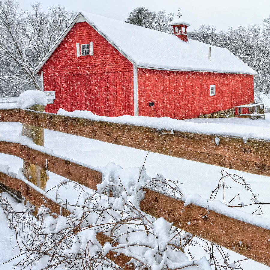 Barnyard Photograph - Its Snowing Square by Bill Wakeley