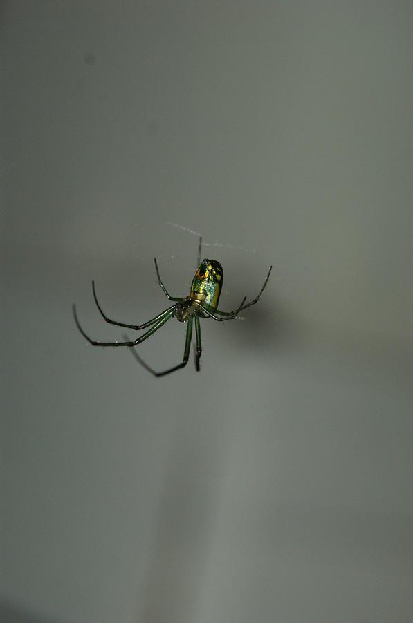 Backyard Photograph - Itsy Bitsy Spider by Heidi Poulin