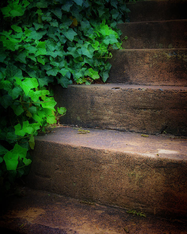 Ivy Photograph - Ivy Beside Steps by Steve Hurt