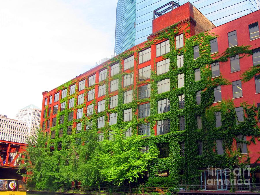 Downtown Photograph - Ivy-covered Building On The Chicago River by Matthew Peek