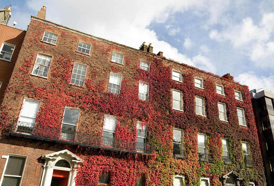 Ivy Covered Georgian Style Building In Photograph by Lleerogers