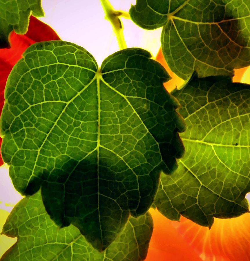 Ivy Photograph - Ivy Light by Chris Berry
