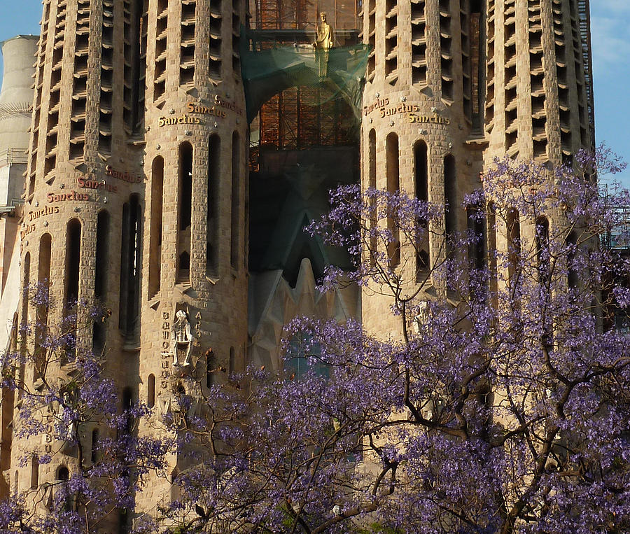 Sagrada Famillia Photograph - Jacaranda In Barcelona by Christine Burdine