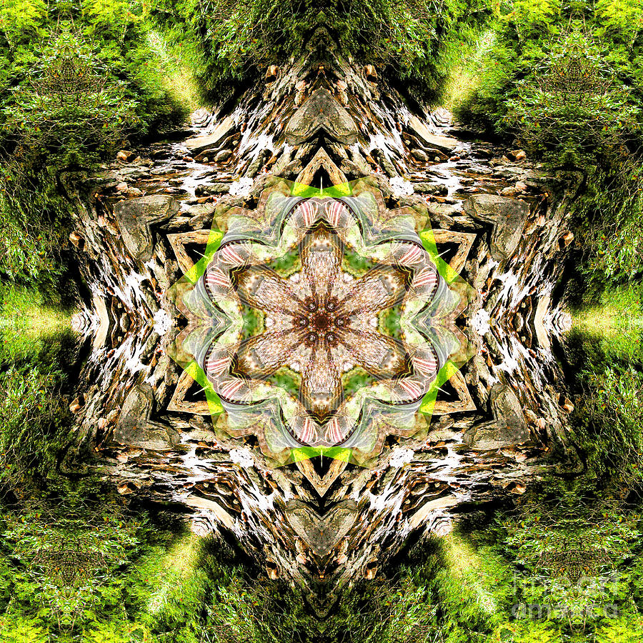 Rainbow Photograph - Jack In The Pulpit Mandala by Susan Bloom