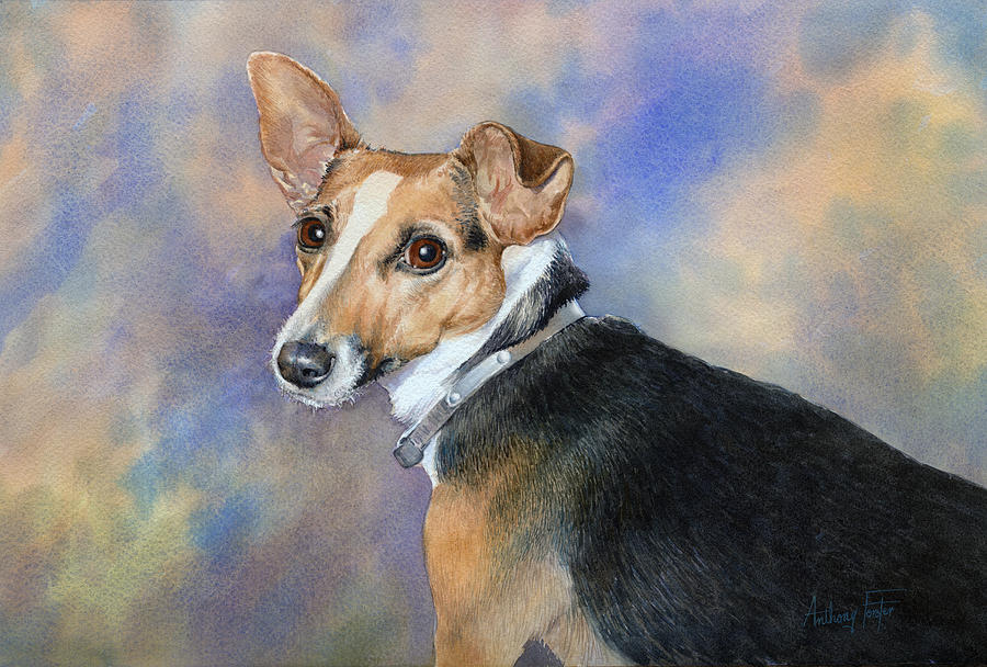 Pet Painting - Jack Russell by Anthony Forster