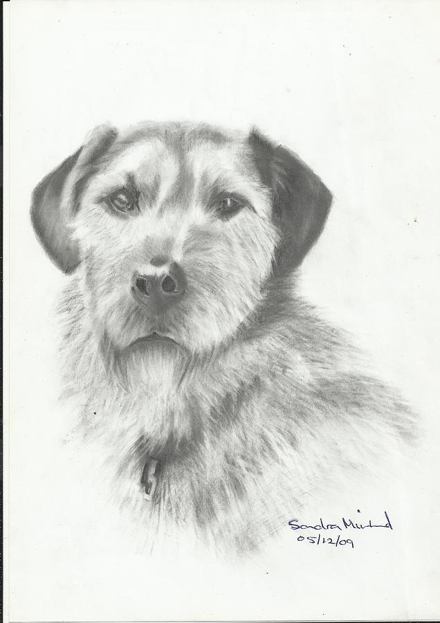 Jack Drawing by Sandra Muirhead
