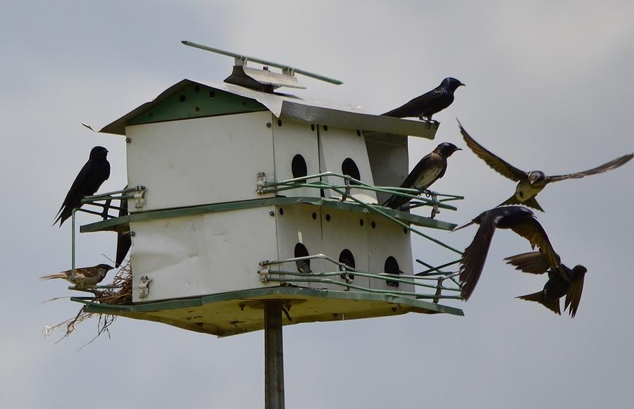 Purple Martins Photograph - Jacked Up Martin House #3 by Stefon Marc Brown