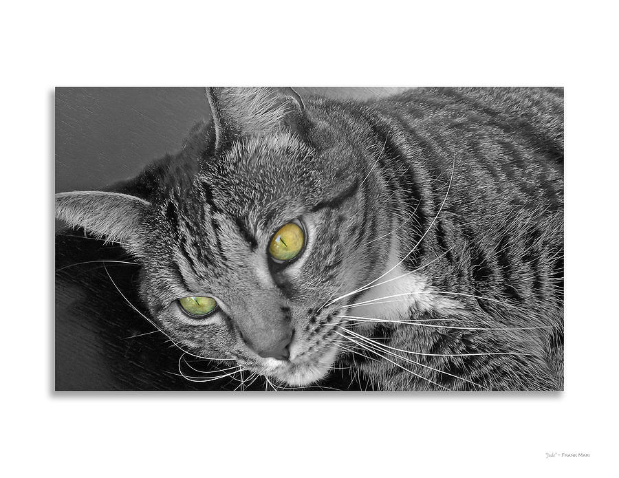 Animal Photograph - Jade - black and white by Frank Mari