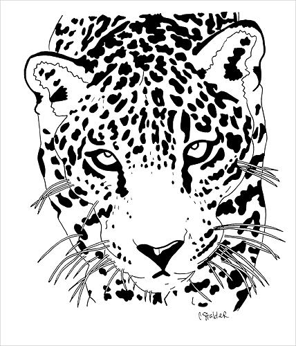 animal drawing drawing jaguar 1 by candace stalder
