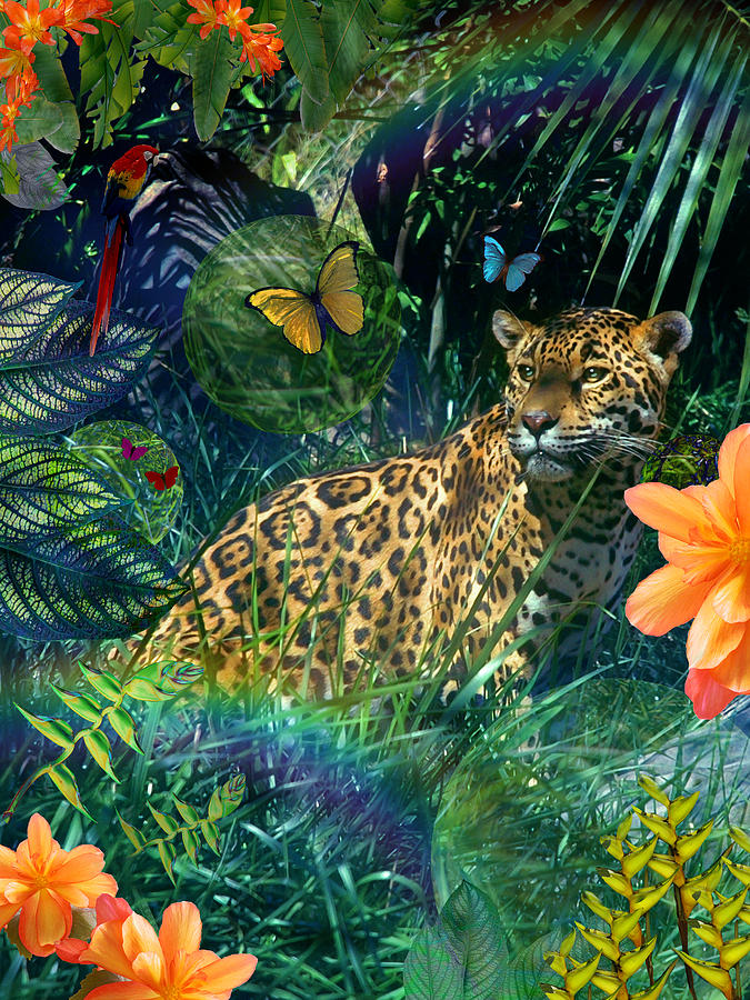 Jaguar Meadow Photograph By Mgl Meiklejohn Graphics Licensing