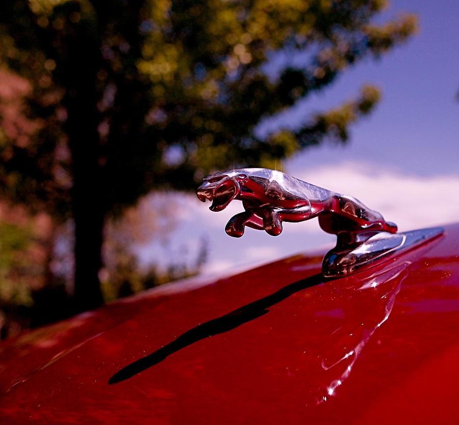Jaguar Photograph - Jaguar by Rona Black