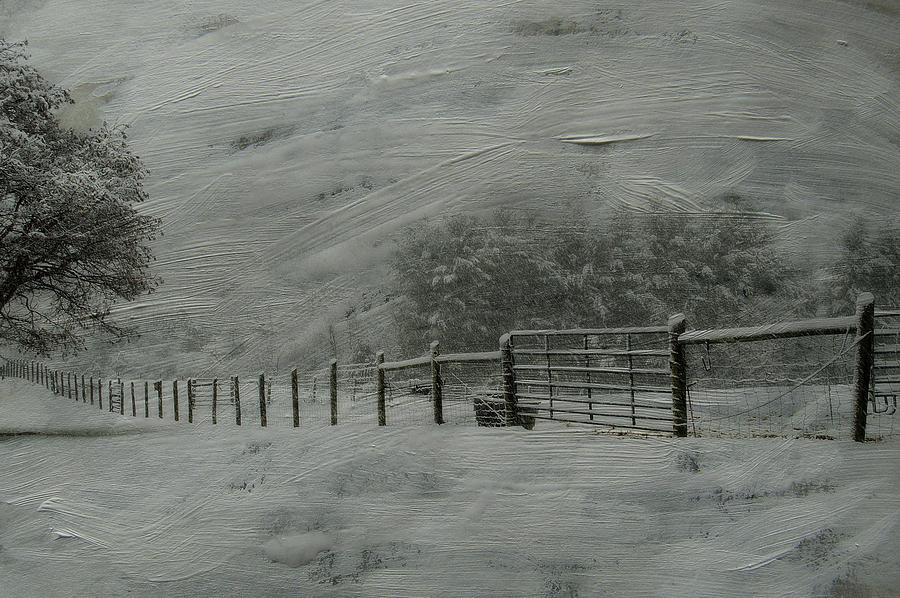 Snow Photograph - January Storm by Kathy Jennings