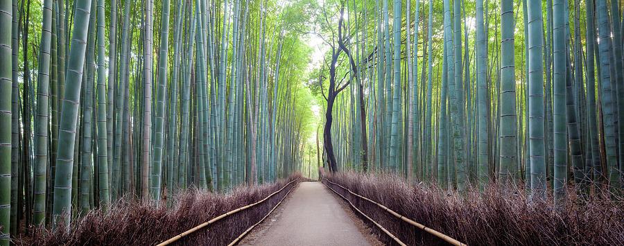 Japan, Kyoto, Arashiyama Bamboo Forest Photograph by Simonbyrne