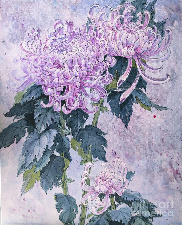 watercolor paintings of chrysanthemums | chrysanthemums by ...