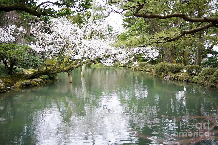 Cherry Blossom Photograph - Japanese Garden  by Moshe Torgovitsky