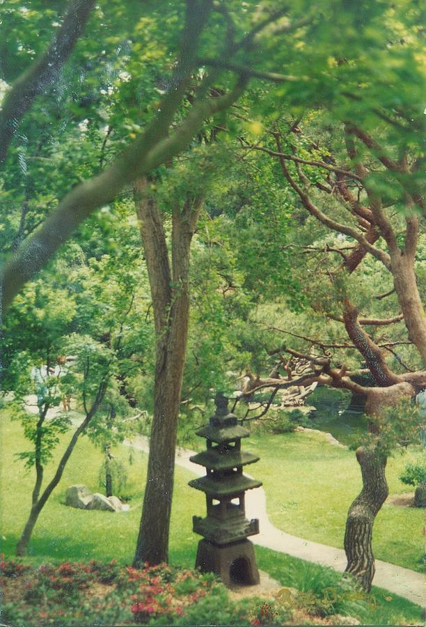 Overlook Of Japanese Garden. Photograph - Japanese Garden by Robert Bray