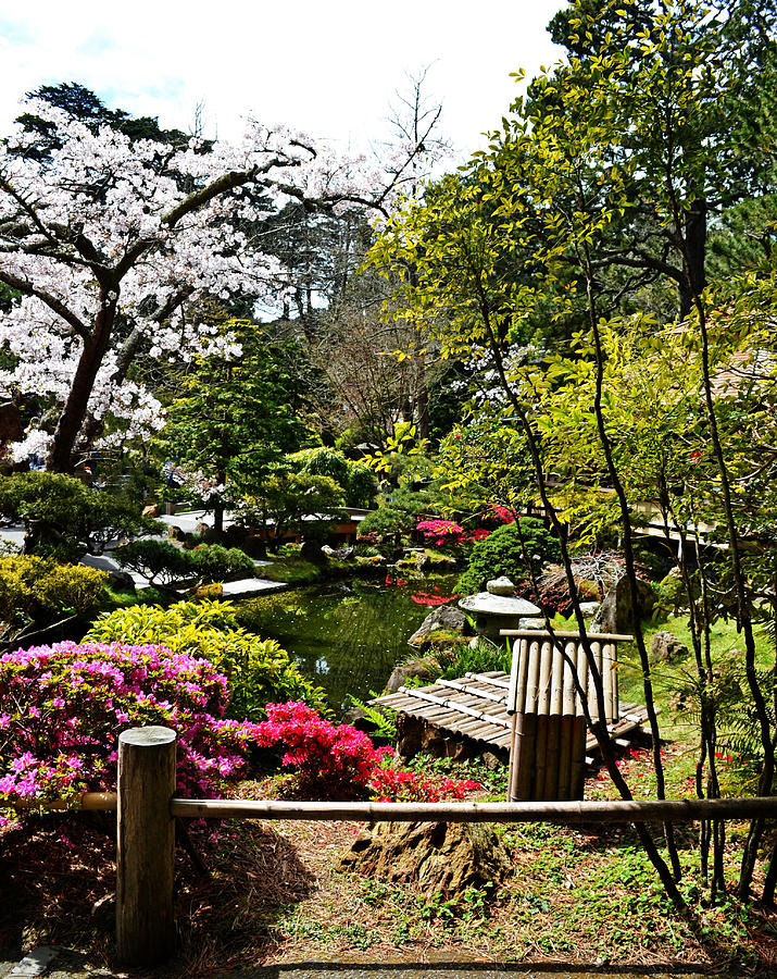 Francisco Photograph - Japanese Gardens by Holly Blunkall