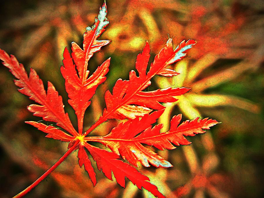Maple Photograph - Japanese Maple Leaf  by Chris Berry