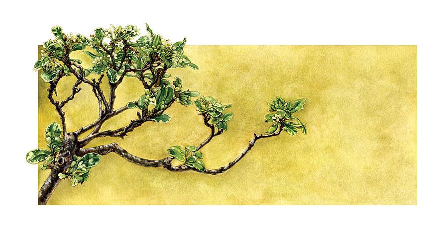 Japanese Painting - Japanese Pittosporum at the Hakone Gardens by Suzannah Alexander