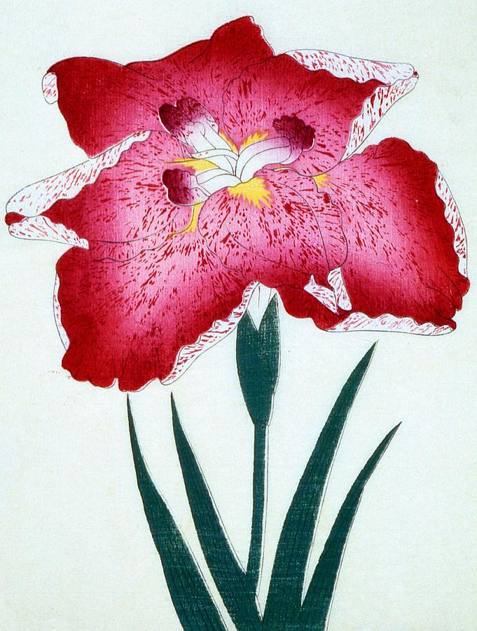 Floral Painting - Japanese School by Japanese School